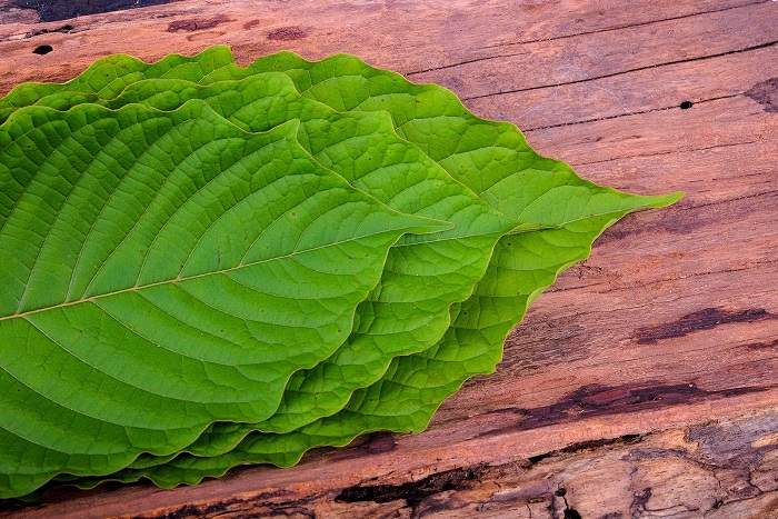 Know whether Kratom is Legal to Utilize